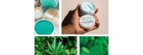 BCL SPA Tingling Mint CBD   Professionele huidverzorging!